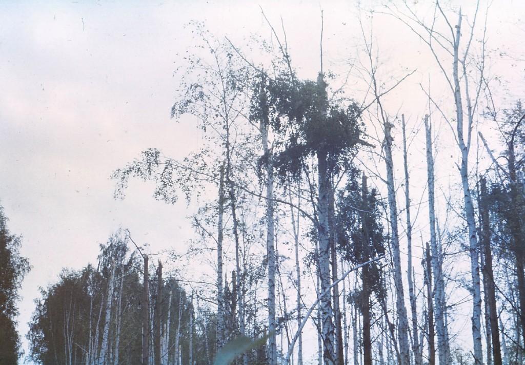 yak42ekb19907